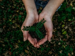 hands holding earth with a plant in it